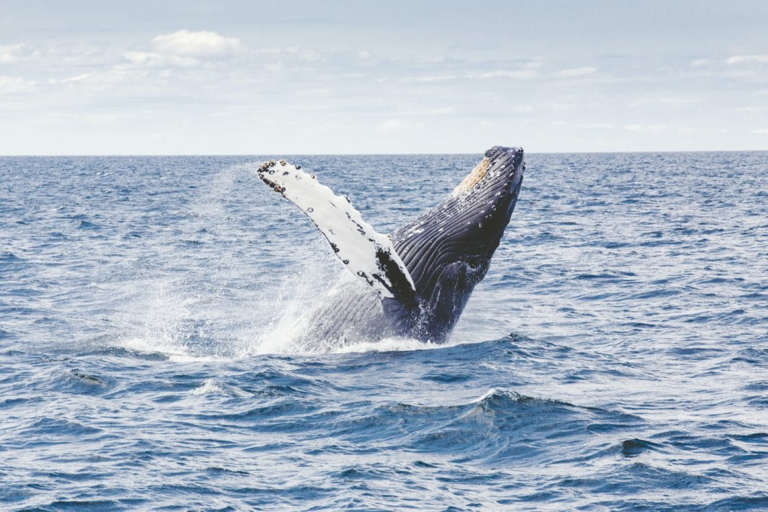 Boston Harbor Cruise Whale Watching